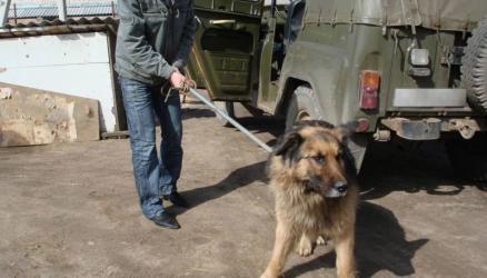 Решением Окуловского районного суда требования прокурора по факту заключения контракта по отлову бесхозяйных животных удовлетворены