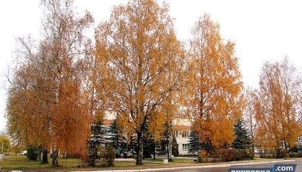 18 октября состоится встреча Главы Окуловского района с жителями города по вопросу спиливания деревьев