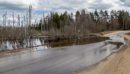 Участок дороги Окуловка — Боровно подтопило водой