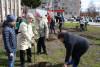 В Кулотино продолжается обустройство «Сада Победы»