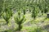 Работа сотрудников Окуловского лесничества направлена на защиту и воспроизводство лесных массивов